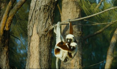 кадр №195637 из фильма Остров лемуров: Мадагаскар