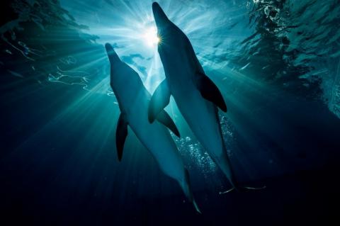 кадр №197583 из фильма История дельфина 2