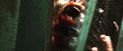 кадры из фильма Репортаж: Апокалипсис