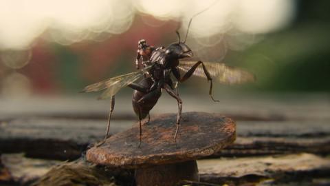 кадр №212654 из фильма Человек-муравей