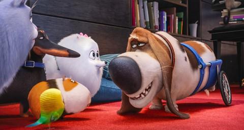 кадр №232926 из фильма Тайная жизнь домашних животных