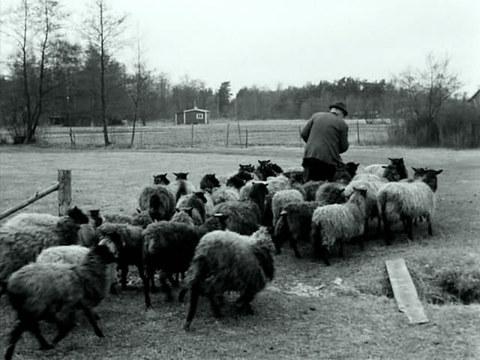 кадр №249663 из фильма Форё - документ 1969