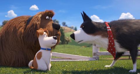 кадр №255344 из фильма Тайная жизнь домашних животных 2