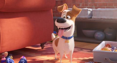кадр №255348 из фильма Тайная жизнь домашних животных 2