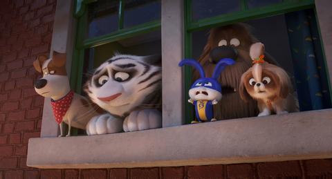 кадр №255355 из фильма Тайная жизнь домашних животных 2