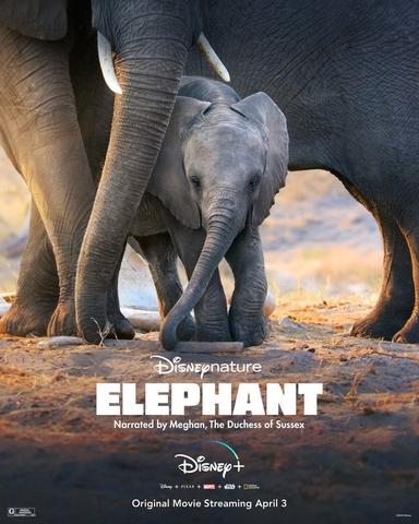 плакат фильма постер Слон