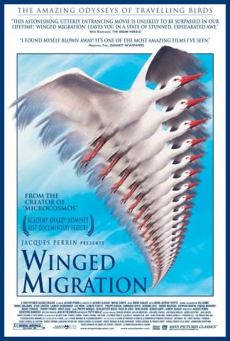 плакат фильма Птицы