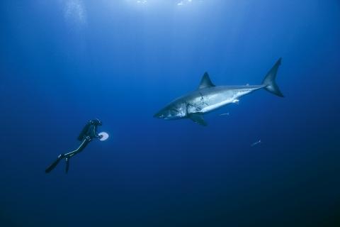 кадр №44227 из фильма Океаны