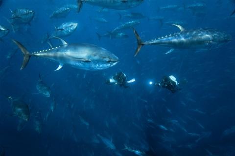 кадр №44228 из фильма Океаны