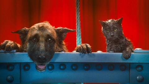 кадр №45619 из фильма Кошки против собак: Месть Китти Галор