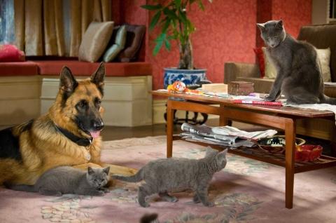 кадр №45621 из фильма Кошки против собак: Месть Китти Галор