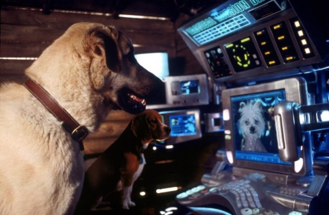 кадр №46830 из фильма Кошки против собак