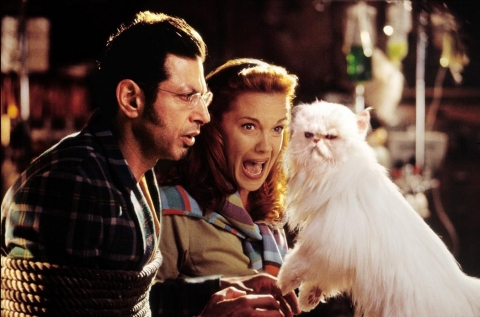 кадр №46833 из фильма Кошки против собак