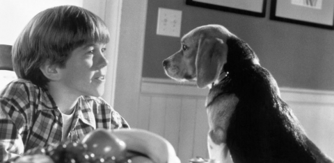 кадр №46838 из фильма Кошки против собак