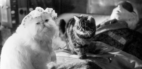 кадр №46839 из фильма Кошки против собак