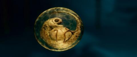 кадр №47931 из фильма Пираньи 3D