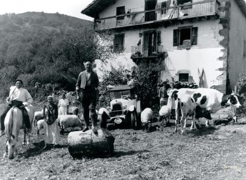 кадр №55460 из фильма Коровы