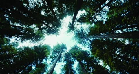 кадры из фильма Древо жизни