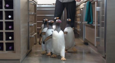 кадр №78298 из фильма Пингвины мистера Поппера