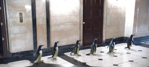 кадры из фильма Пингвины мистера Поппера
