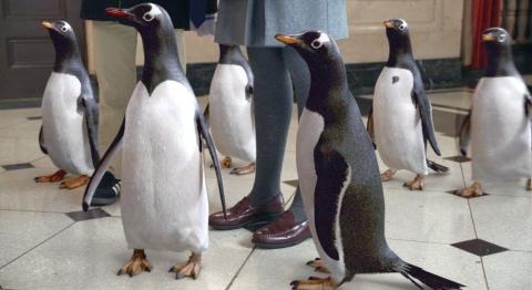 кадр №78303 из фильма Пингвины мистера Поппера