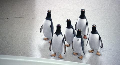 кадр №78304 из фильма Пингвины мистера Поппера