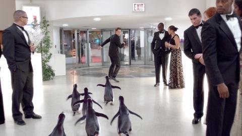 кадр №79562 из фильма Пингвины мистера Поппера