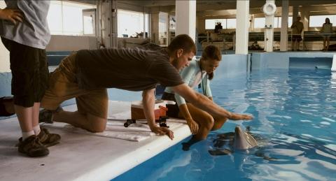 кадры из фильма История дельфина Остин Стоуэлл, Остин Хайсмит,