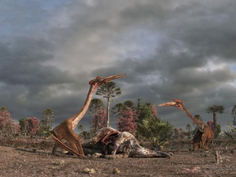 кадр №98352 из фильма Крылатые монстры 3D