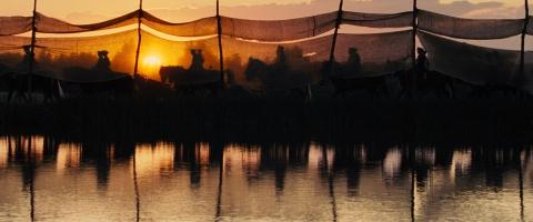 кадр №99076 из фильма Боевой конь