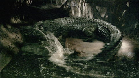 Crocodile attacks in Australia  crocodile attacks from