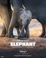 фильм Слон Elephant 2020