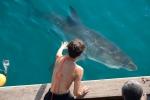 Заклинательница акул кадры