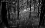 кадр №118781 из фильма Алоис Небель и его призраки