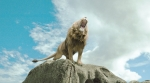 Хроники Нарнии: Принц Каспиан кадры