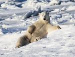 кадр №129156 из фильма Арктика 3D