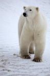 кадр №129164 из фильма Арктика 3D