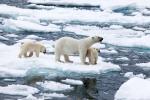 кадр №129166 из фильма Арктика 3D