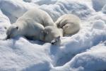 кадр №129168 из фильма Арктика 3D