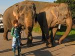 кадр №135219 из фильма Слон