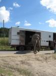 кадр №135221 из фильма Слон