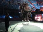 кадр №135222 из фильма Слон