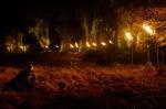 Таинственный лес кадры