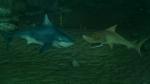 кадр №159300 из фильма Риф 3D