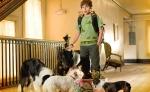 Отель для собак кадры