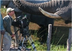 Окаванго 3D: Африканское сафари кадры