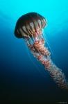 кадр №18161 из фильма Тайны подводного мира 3D