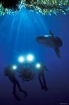 кадр №18162 из фильма Тайны подводного мира 3D