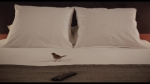 Люди и птицы* кадры