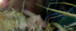 кадр №188616 из фильма Кино про Алексеева